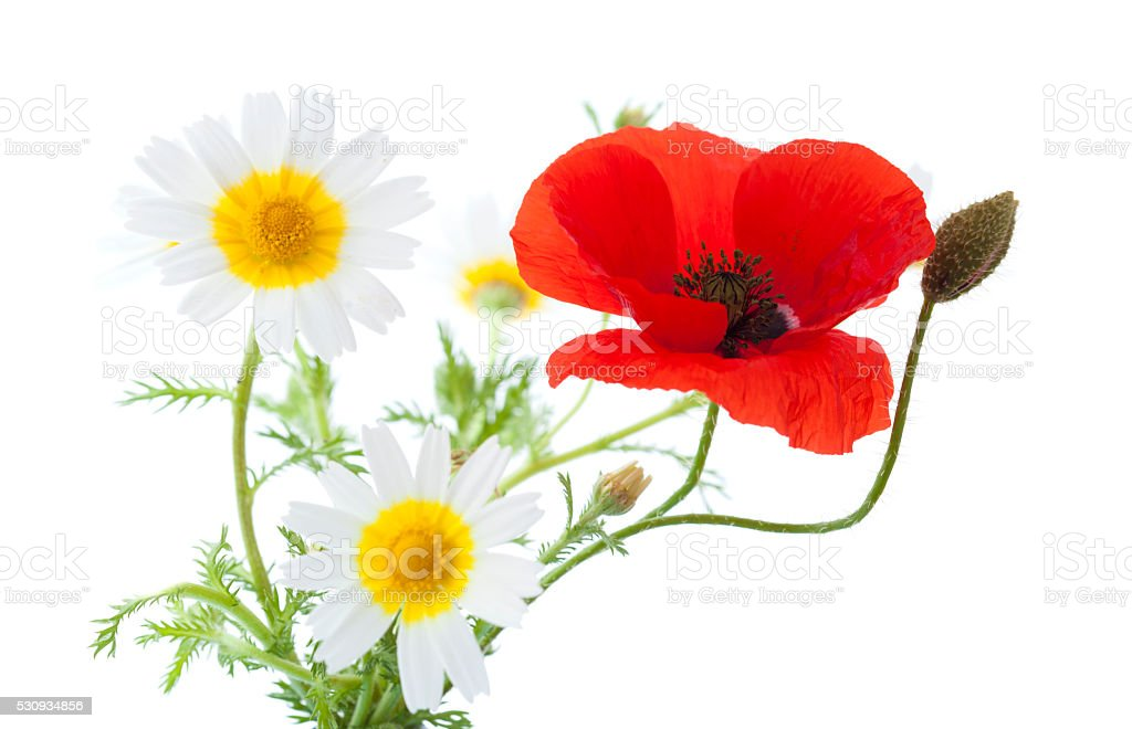 simple posy of Poppy and garland chrysanthemums stock photo