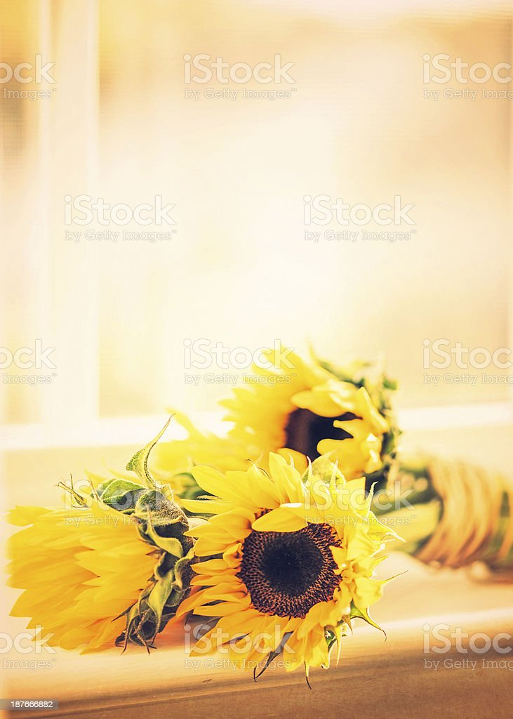 Simple Sunflower Bouquet royalty-free stock photo