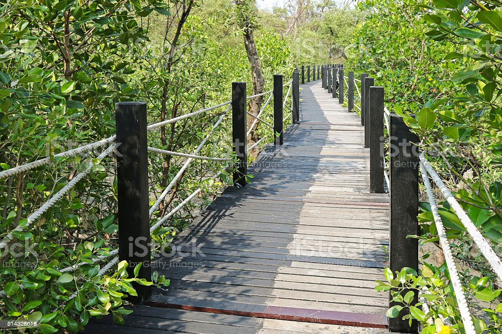 Simple walkway made of wood surrounded by  Mangrove forest stock photo
