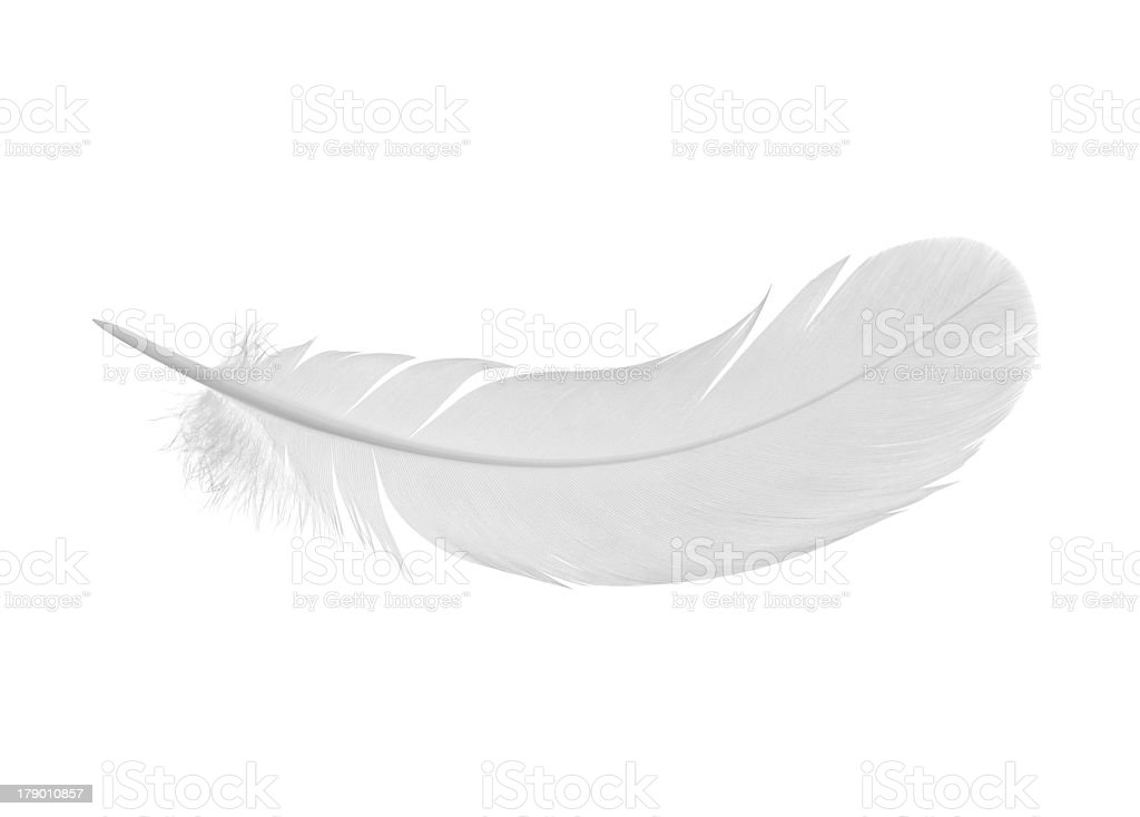 Simple white feather on a white background  stock photo