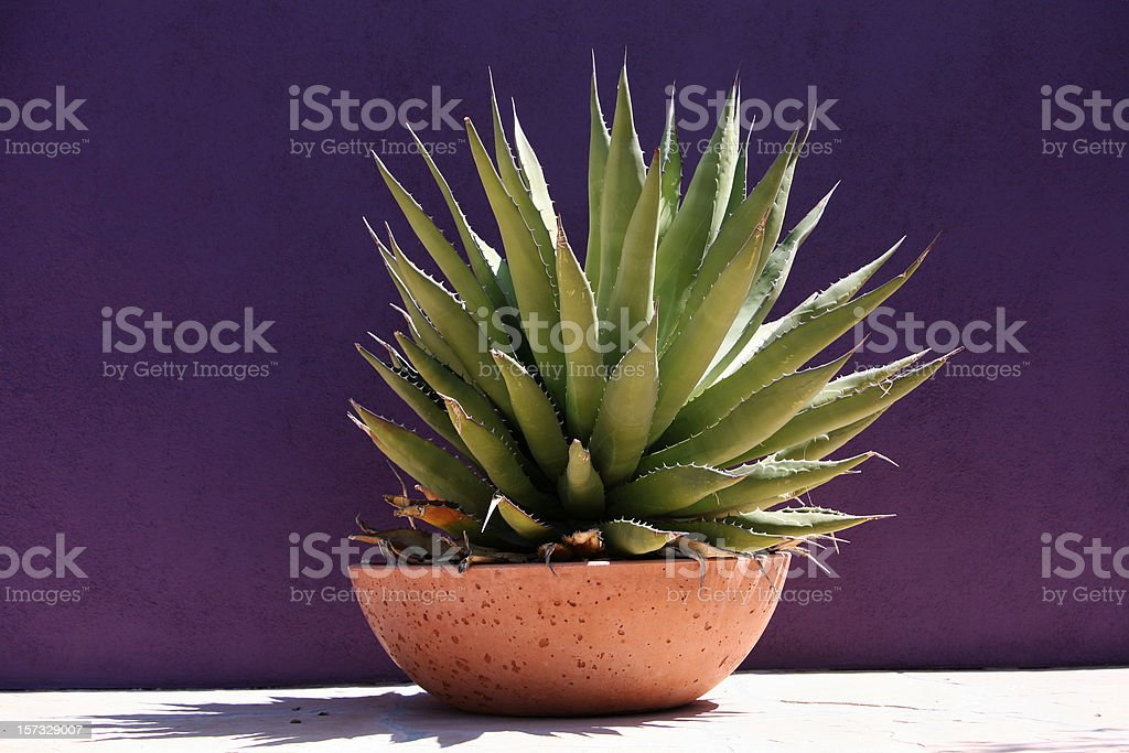Simplicity And Beauty Of Gardening With Succulents stock photo