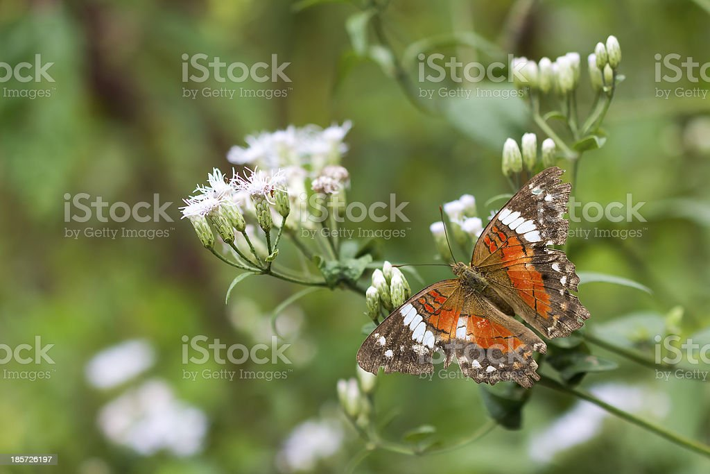 Simply Beautiful Butterfly royalty-free stock photo