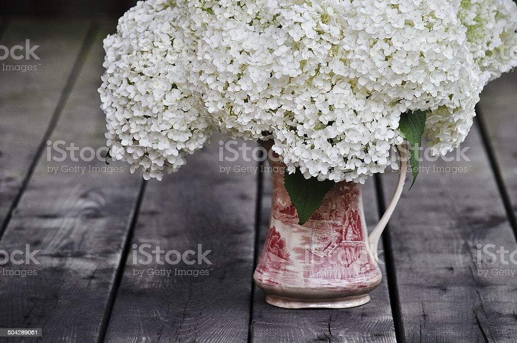 Simply Gorgeous - Annabelle Hydrangea stock photo