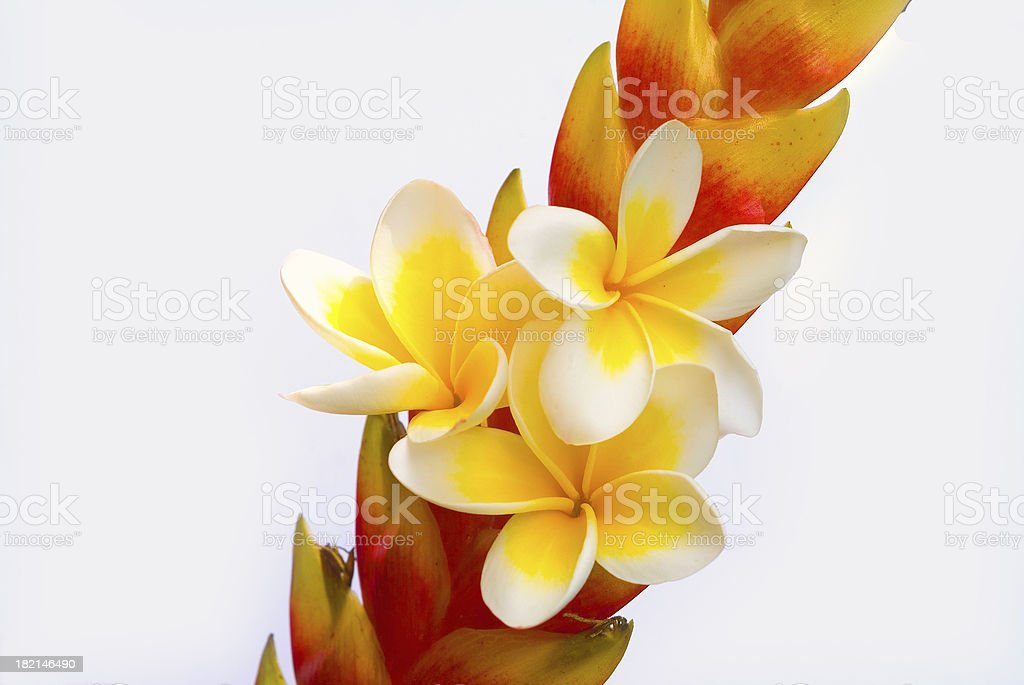 Simply Tropical stock photo