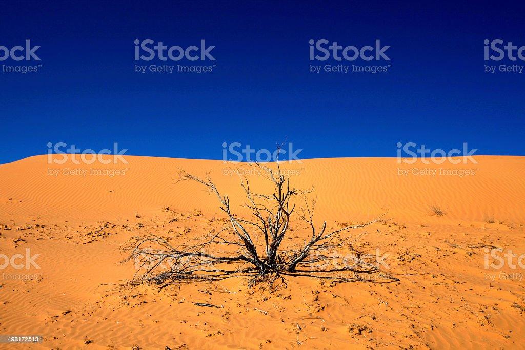 Simpson Desert Tree stock photo