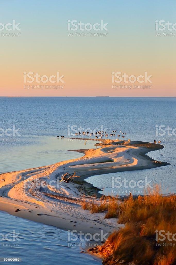Sinepuxent Bay Sandbar and Geese stock photo