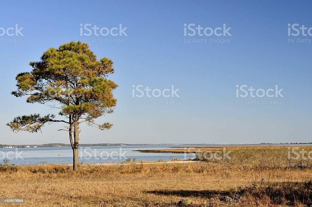 Sinepuxent Bay View stock photo