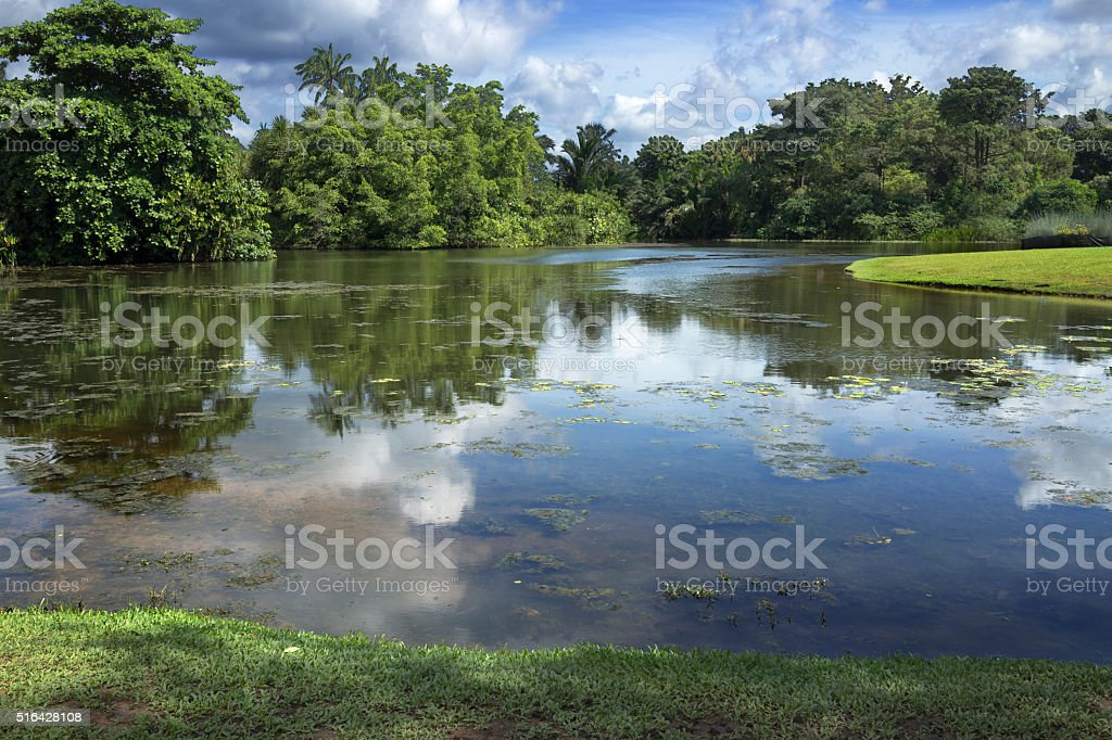 Singapore Botanic Garden stock photo