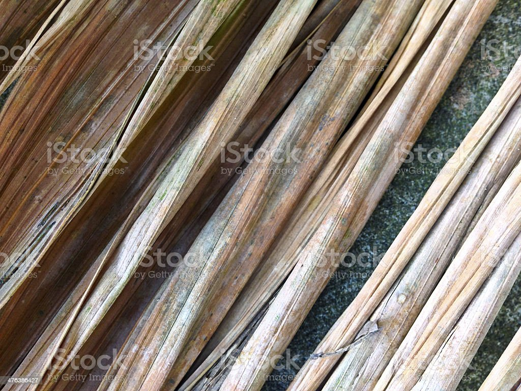 Singapore, palm frond. royalty-free stock photo