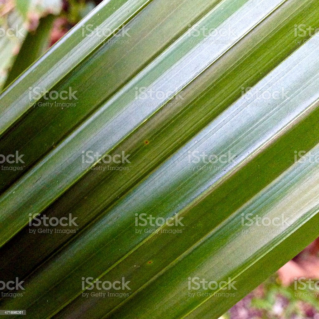 Singapore, tropical foliage. royalty-free stock photo