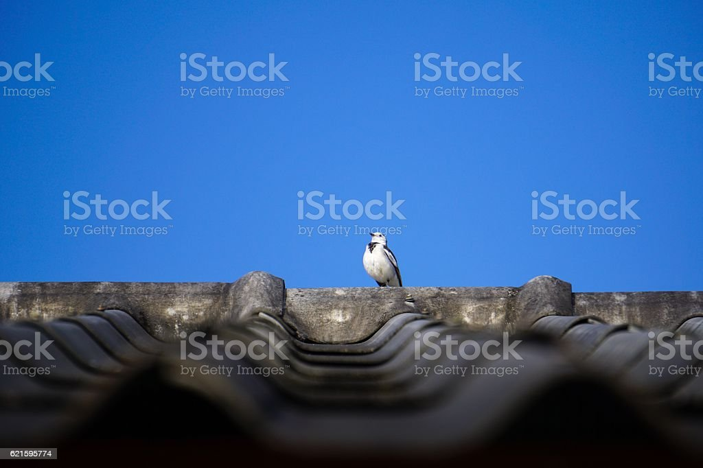Singgle bird on the roof royalty-free stock photo
