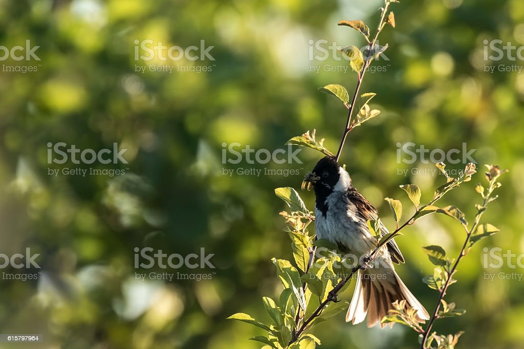 Singing bird in a tree stock photo