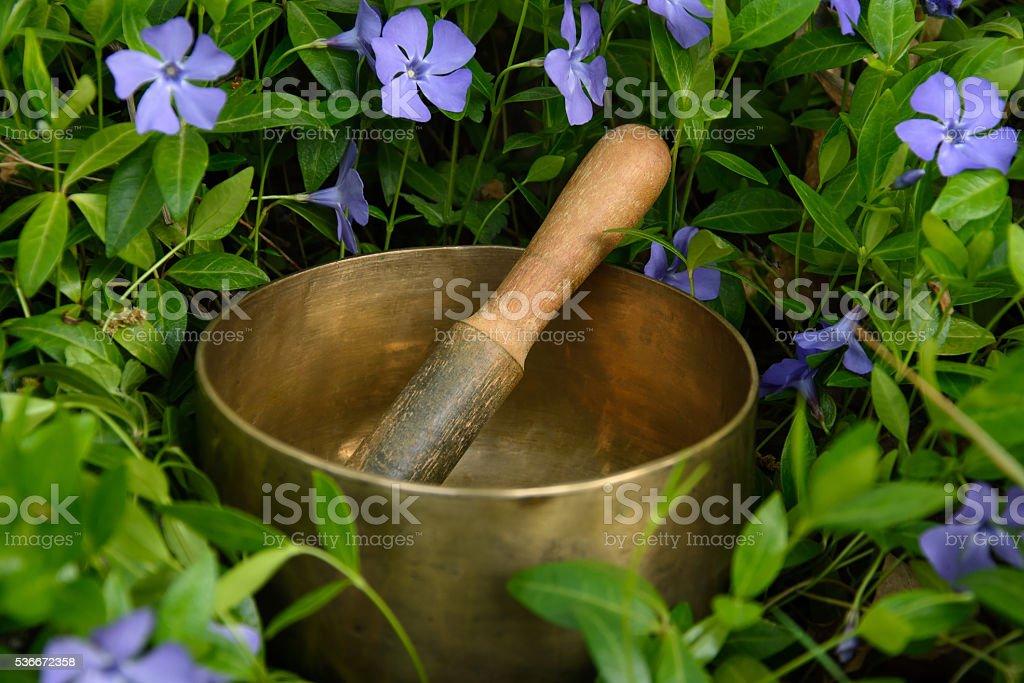 Singing Bowl among flowers cornflower stock photo