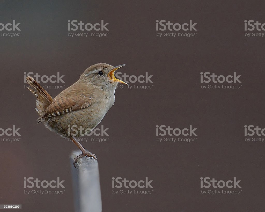 Singing his heart out stock photo
