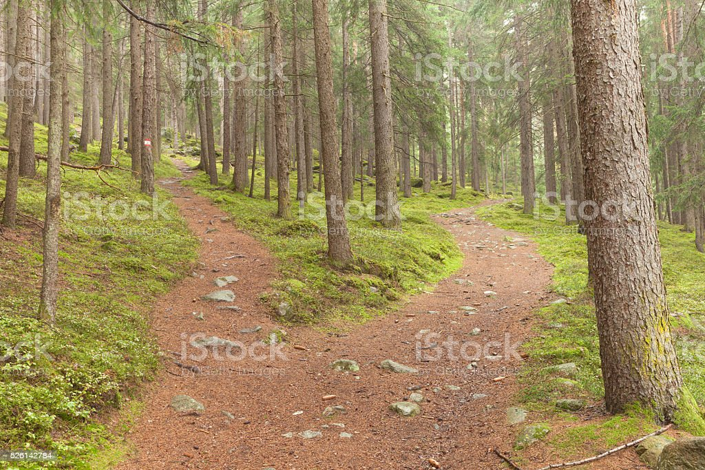 single alpine path splits in two different directions. stock photo