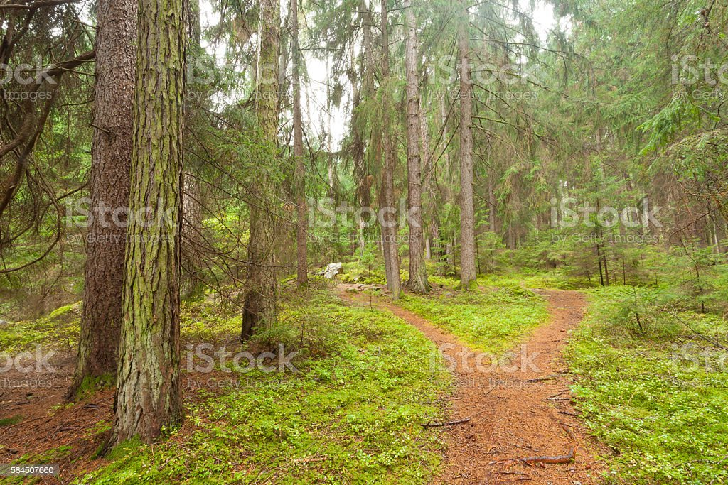 single alpine path splits in two different directions stock photo