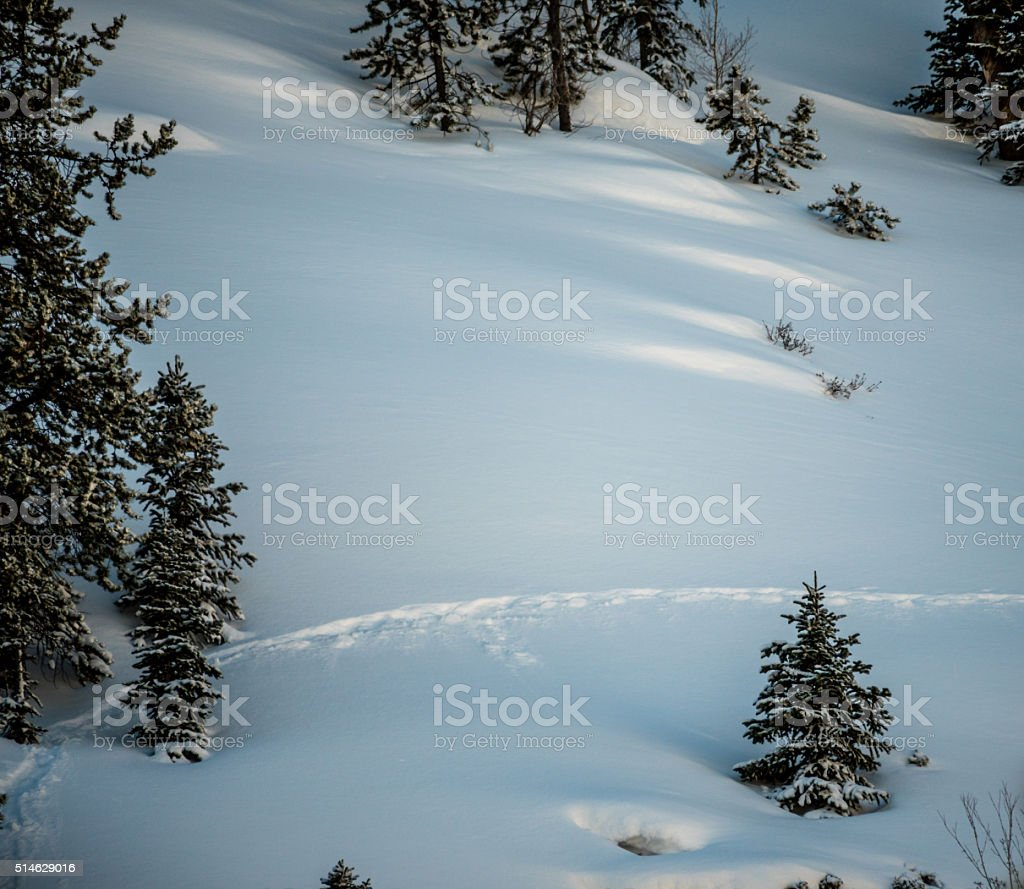 Single Animal Trail Through Fresh Snow stock photo