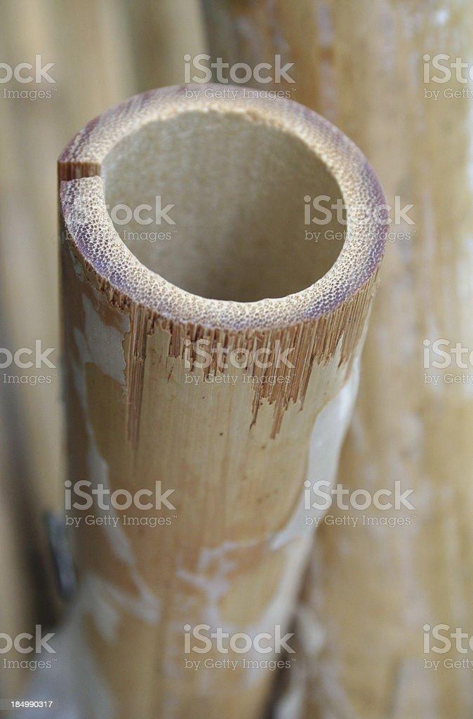 single bamboo cane royalty-free stock photo