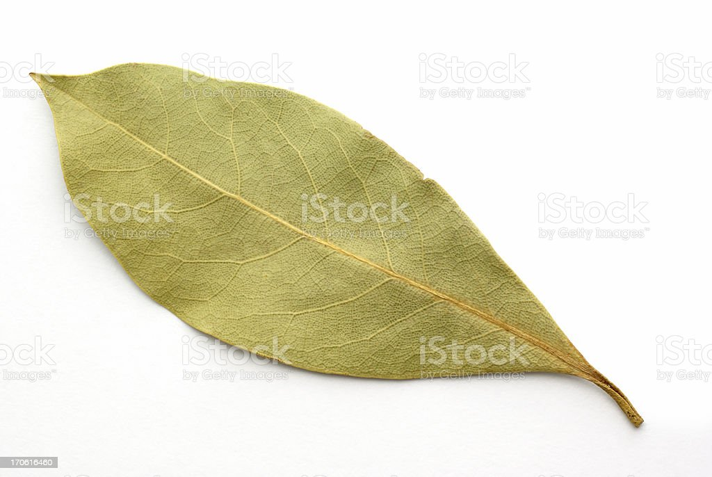 single bay leaf on white stock photo