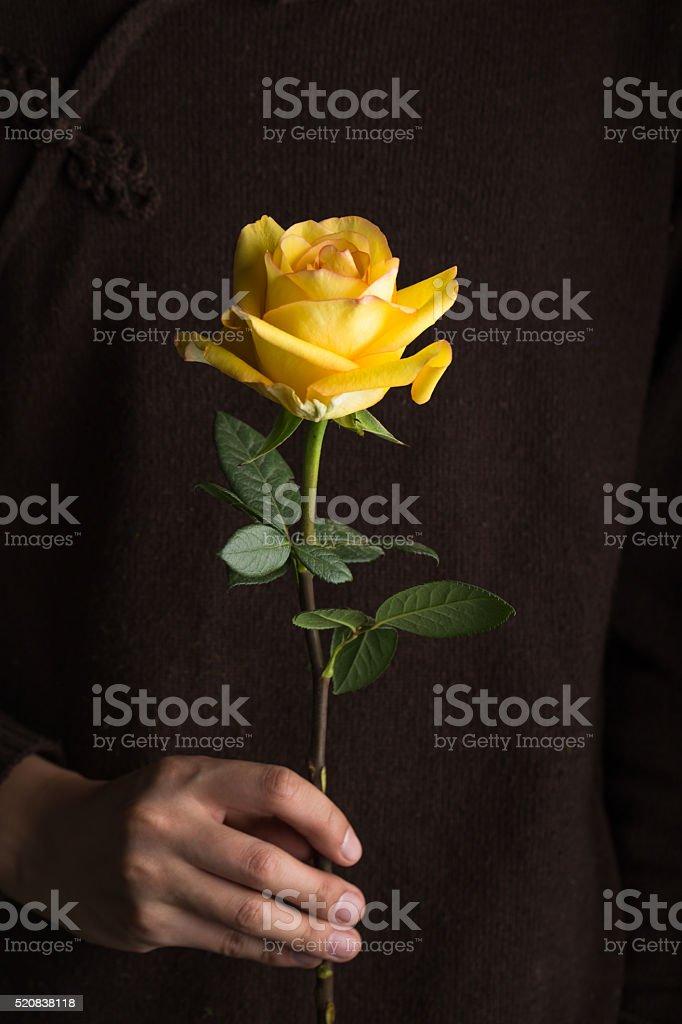 single beautiful yellow rose hold by hand stock photo