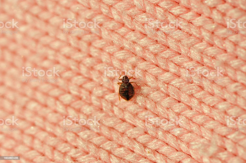 A single bed bug on a blanket fiber stock photo