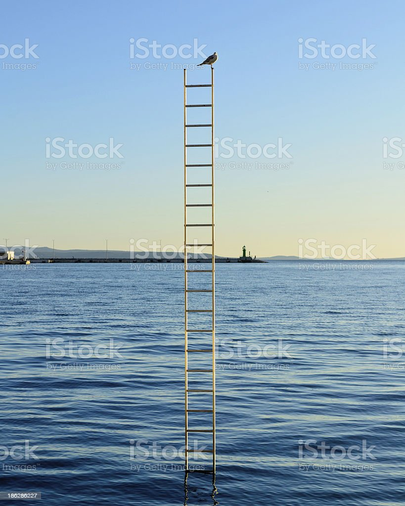 Single bird on top of the ladder stucked in sea royalty-free stock photo