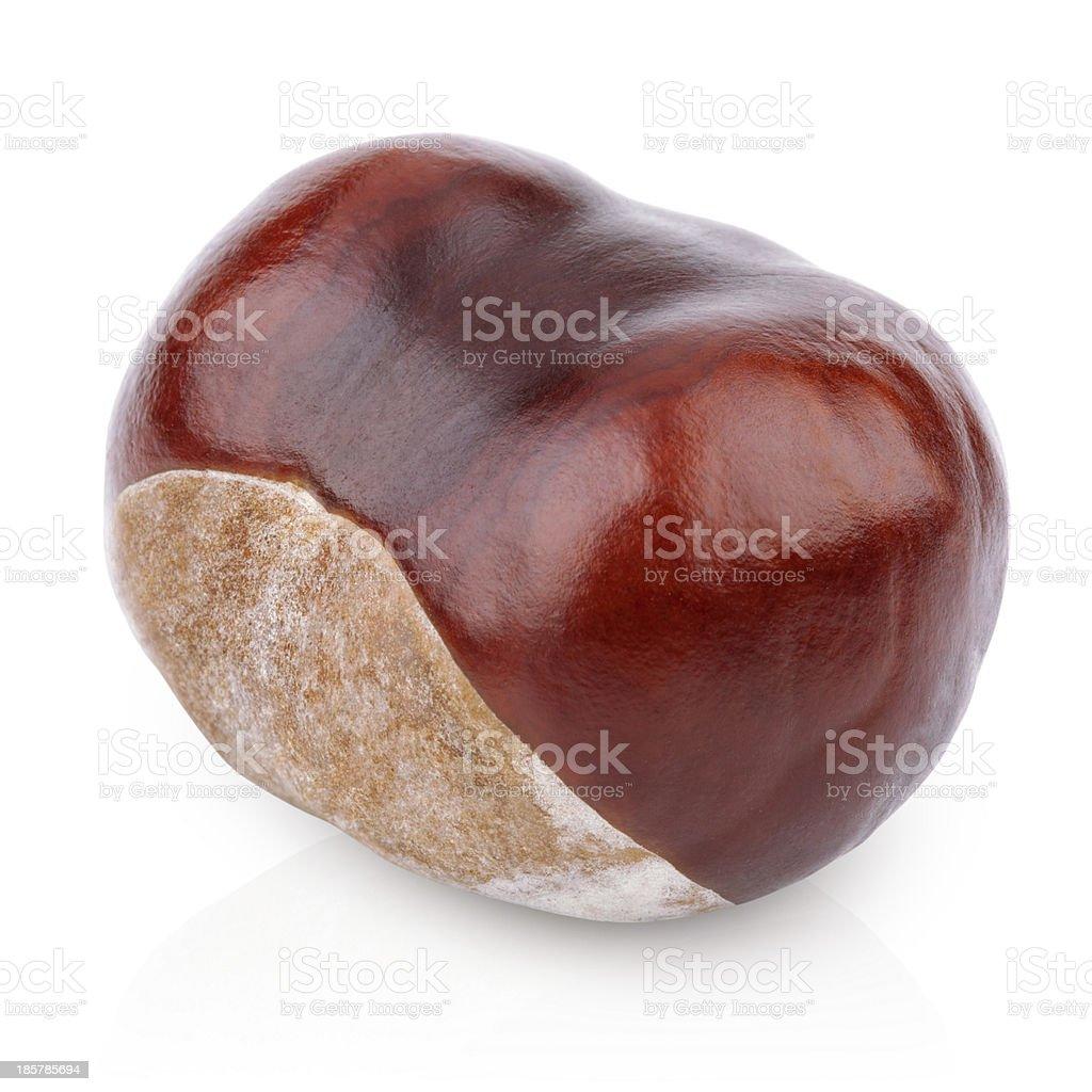 Single chestnut on white stock photo