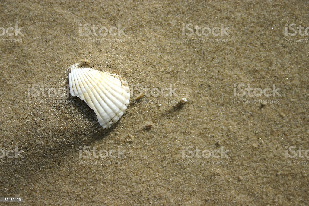 single clam weathered and broken royalty-free stock photo