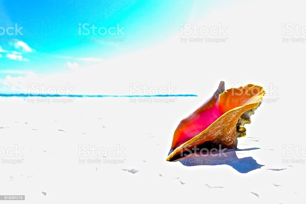 Single Conch Shell with Beach and Sky stock photo