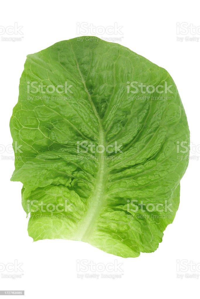 Single cos lettuce leaf stock photo