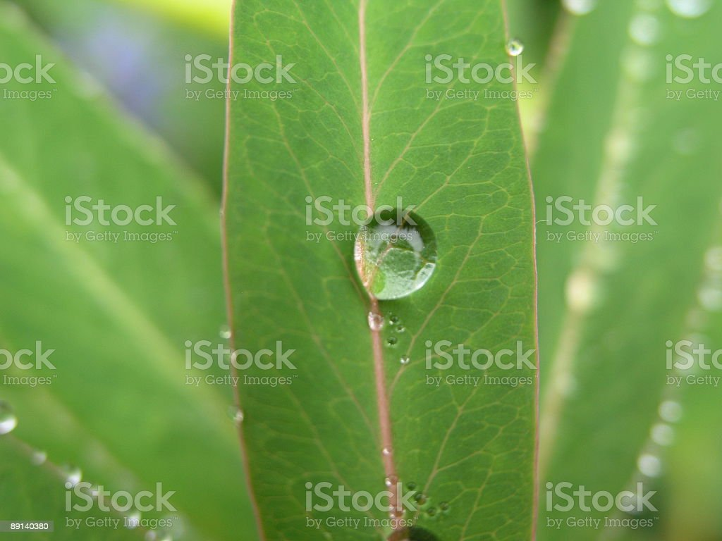 Single Dew Drop stock photo