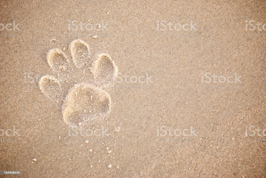 Single Dog Paw Print in Textured Brown Sand stock photo