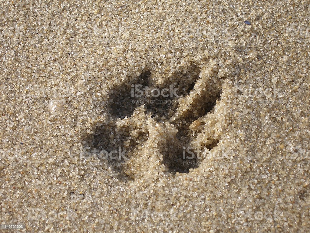 Single dog paw print in the grainy sand royalty-free stock photo