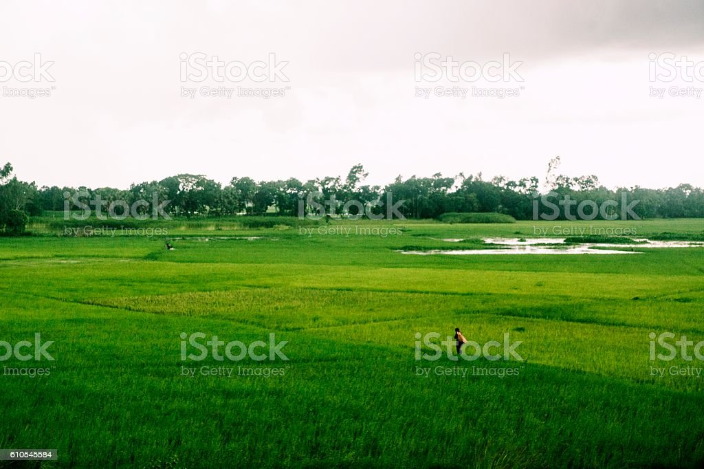 Single farmer in field working. stock photo