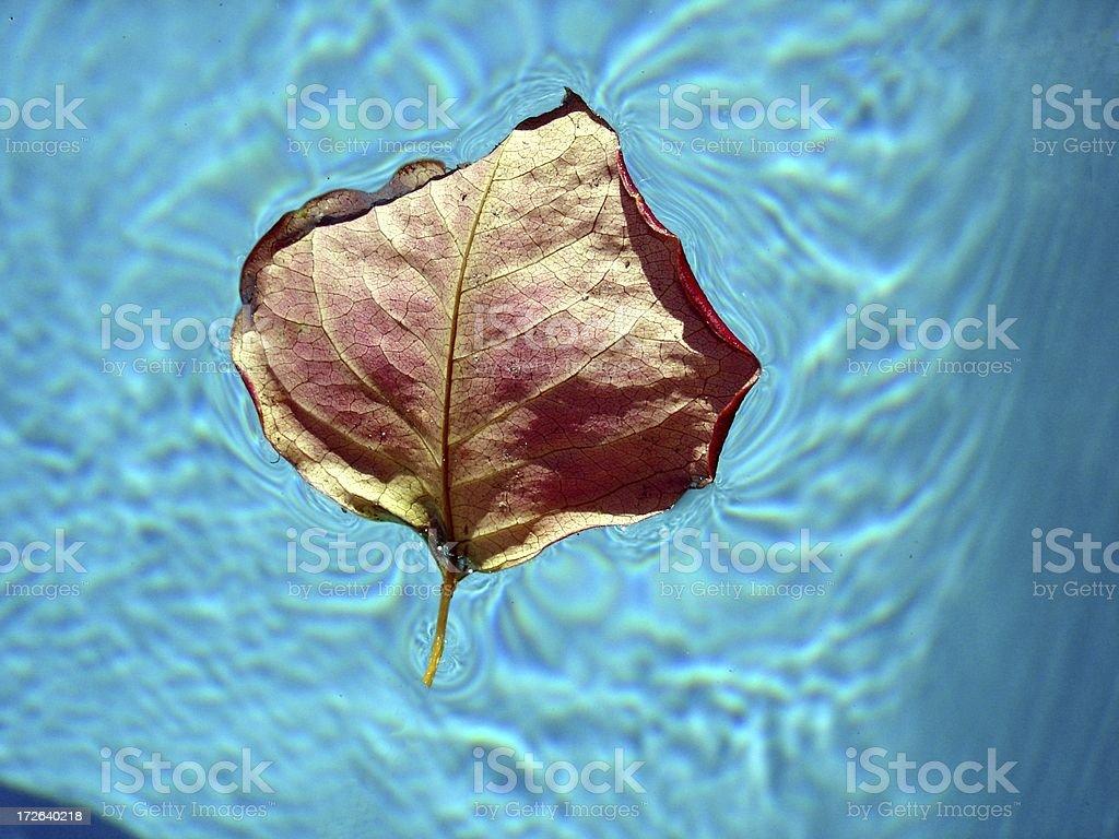 Single Floating Leaf stock photo