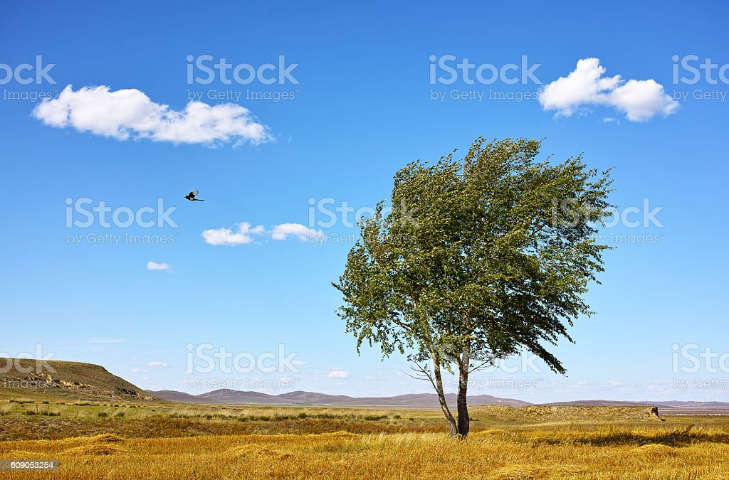 single flying bird and tree under bule sky stock photo