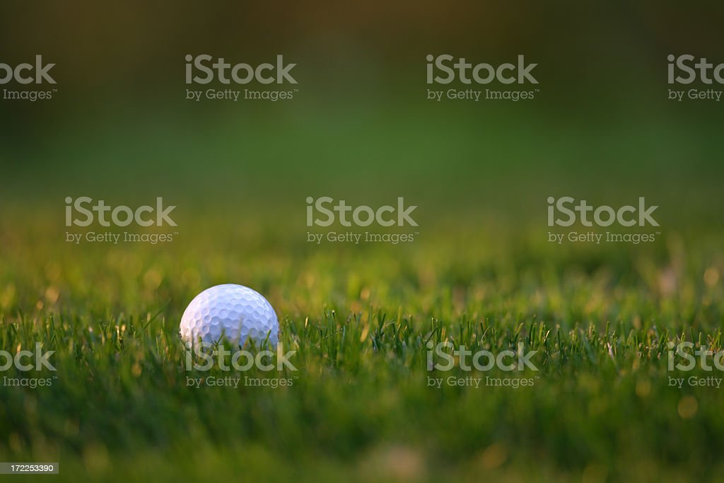 A single golf ball sitting in the grass stock photo