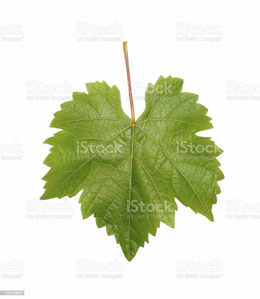 Single green grape leaf on a white background stock photo