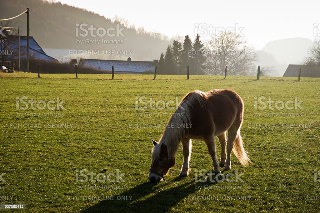 Single horse grazing on meadow backlit by sunshine stock photo