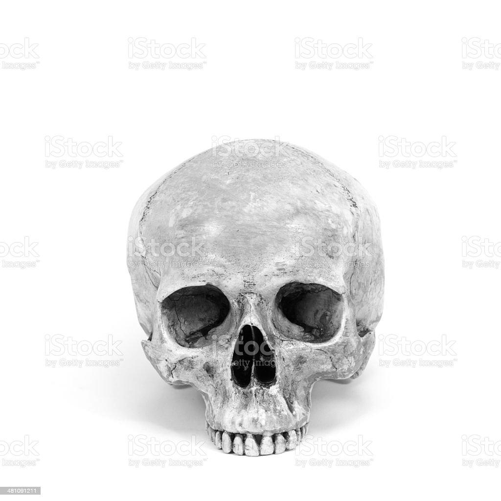 single human skull isolated on white background royalty-free stock photo