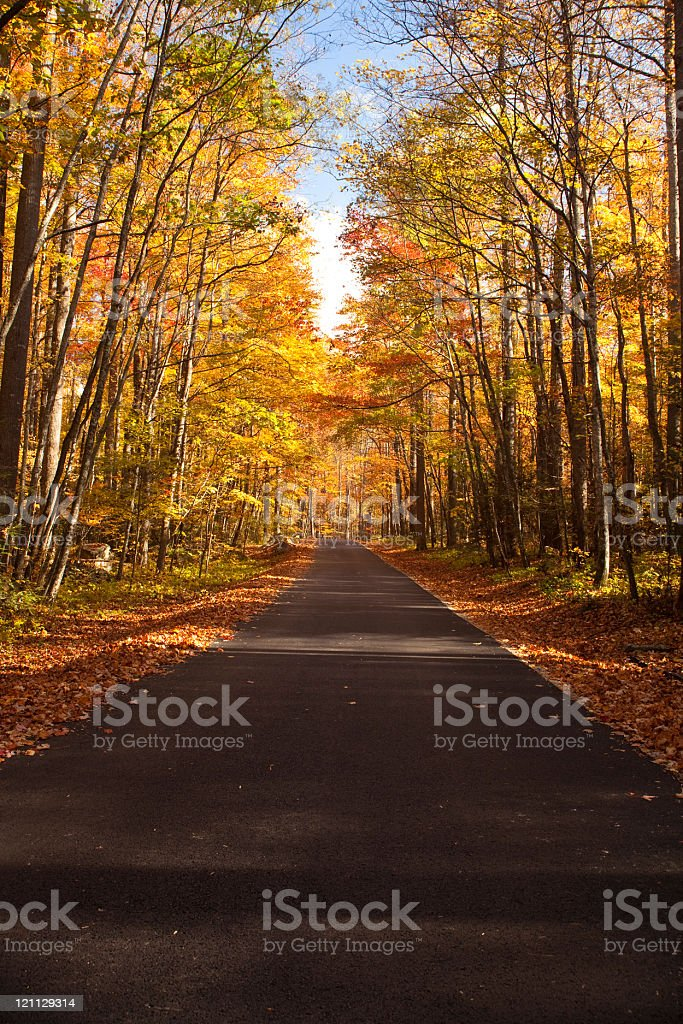 Single lane road at autumn royalty-free stock photo