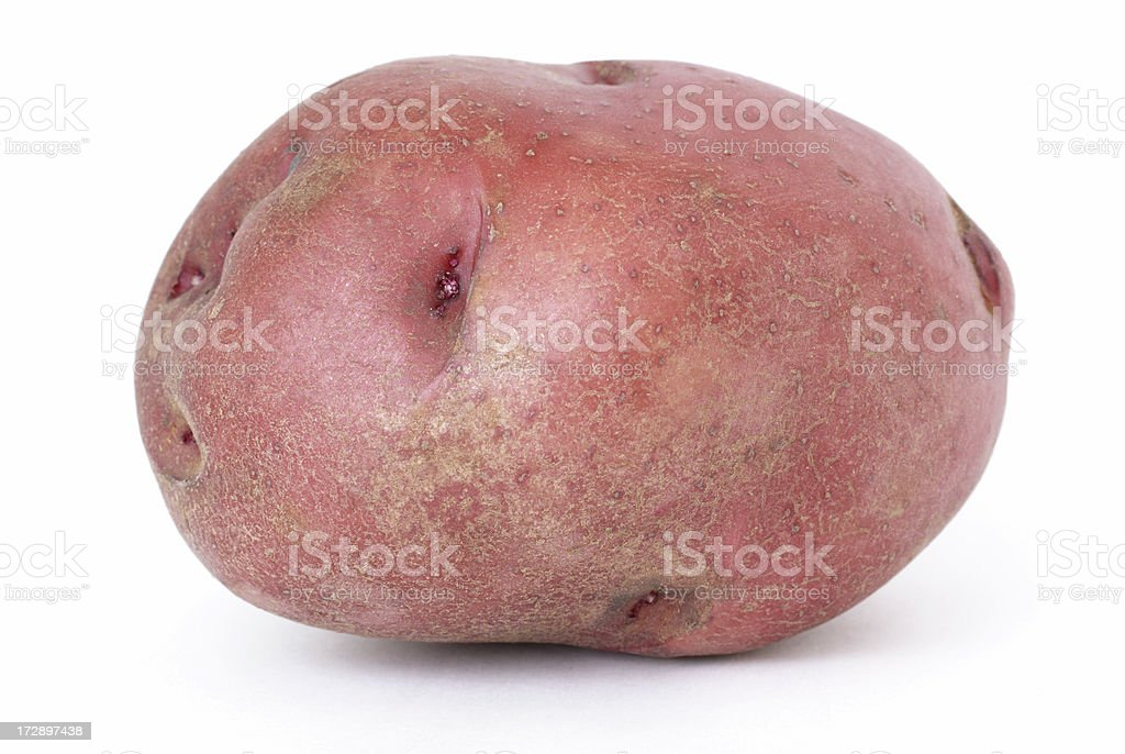 single large red potato stock photo