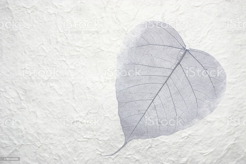 Single leaf in paper royalty-free stock photo