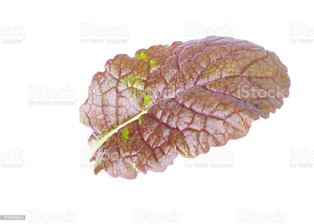 Single Leaf of Mustard Salad stock photo