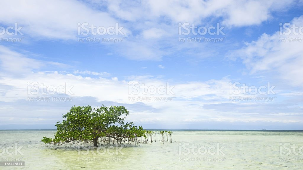 single mangrove in shallow water royalty-free stock photo