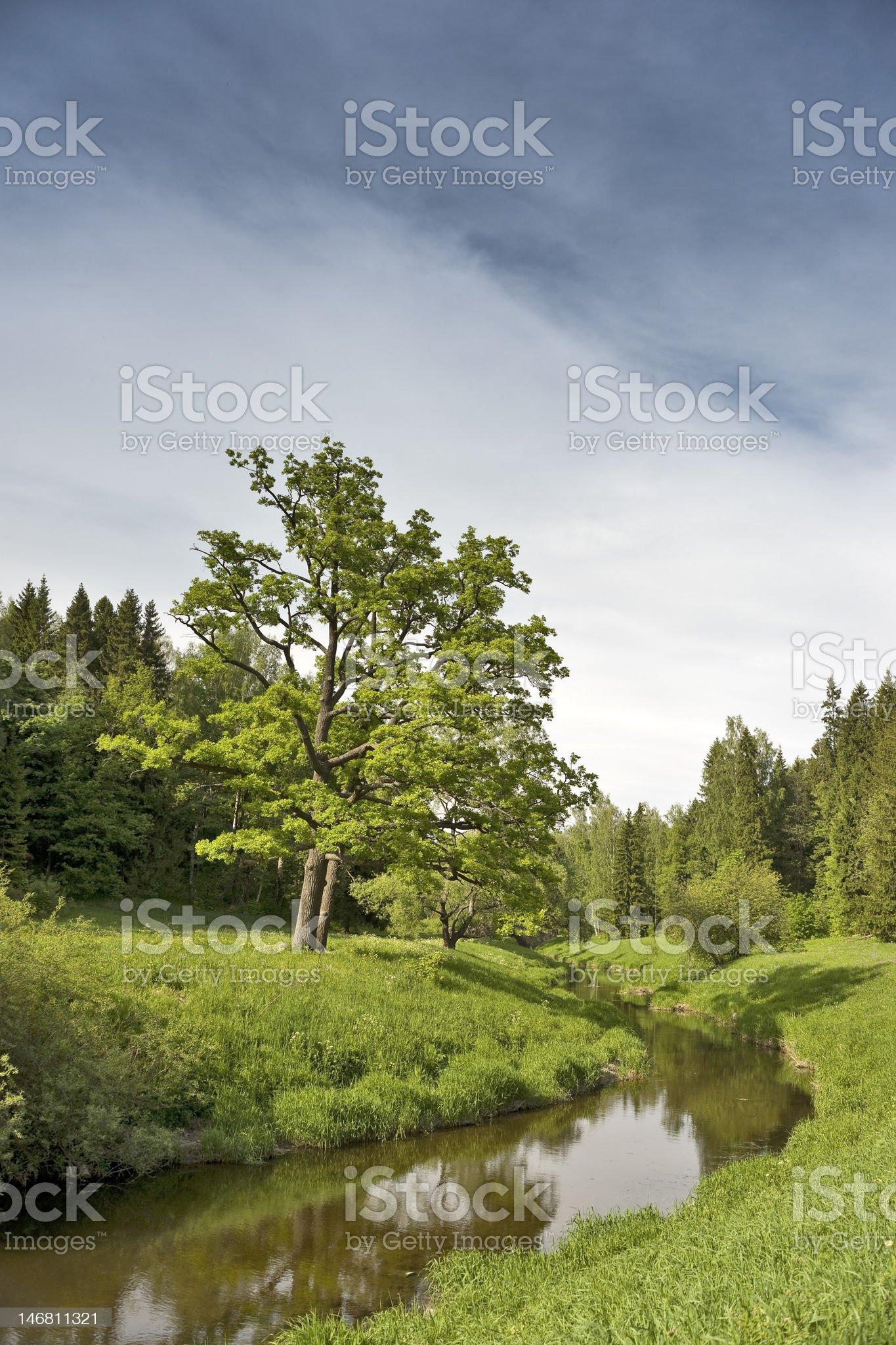 Single oak tree and the river royalty-free stock photo