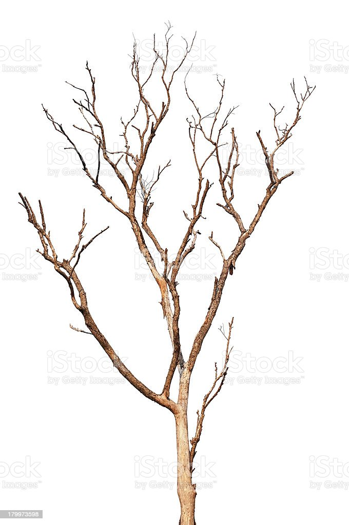 Single old and dead tree royalty-free stock photo