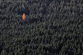 single orange tree in green forest