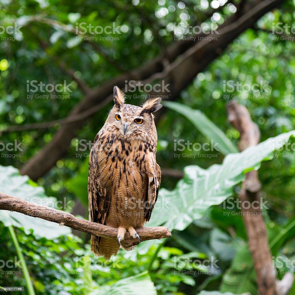 Single owl on branch stock photo