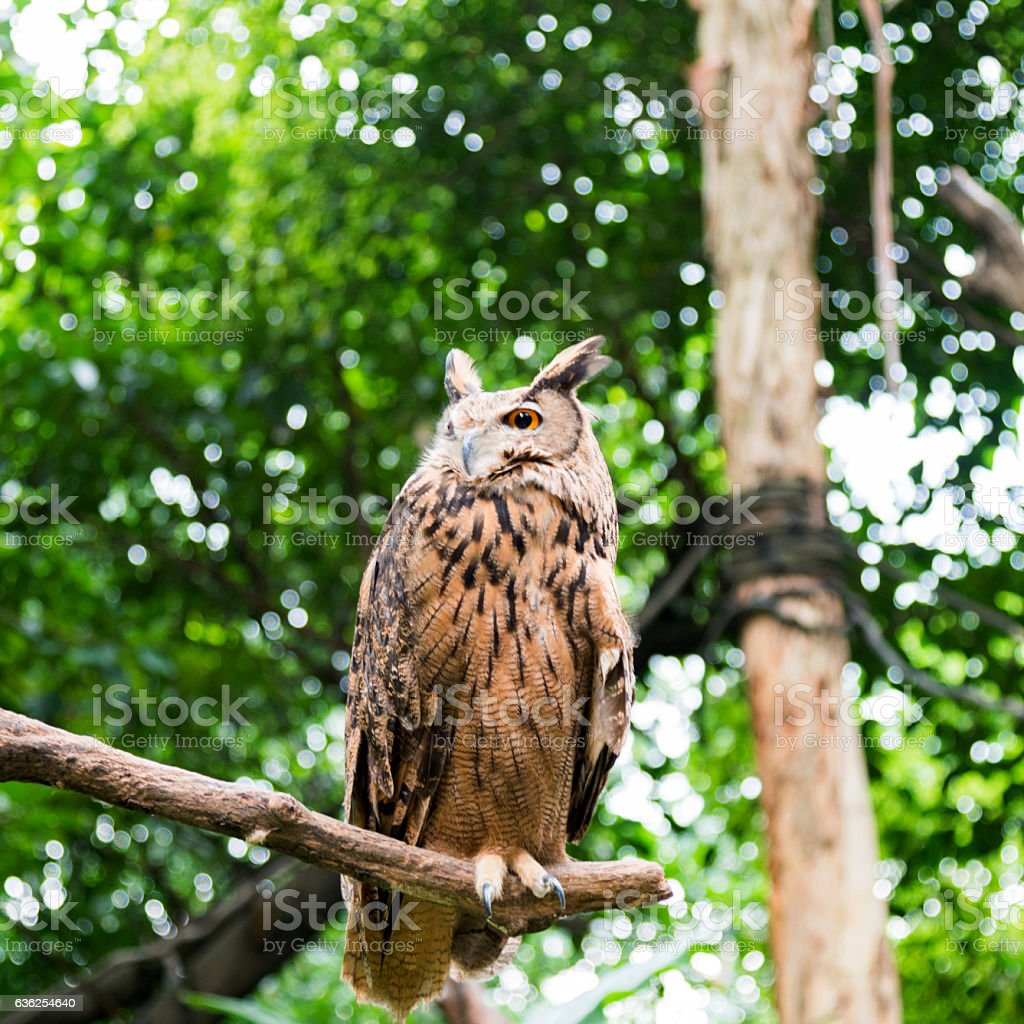 Single owl on branch stock photo